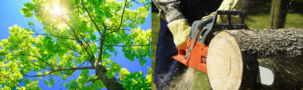 Tree Services Center Valley